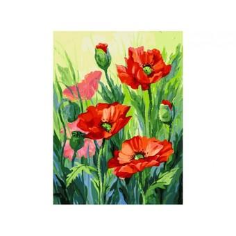 "155-AS Картина по номерам ""Красные маки"" (30х40 см)"