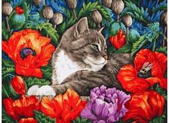 "183-AS Картина по номерам ""Кот в маках"" (30х40 см)"