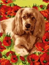 "РН2-002 Картина по номерам ""Пёс в маках"" (30х40 см) на холсте"