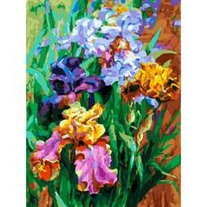 "397-AS Картина по номерам ""Ирисы садовые"" (30х40 см) на холсте"